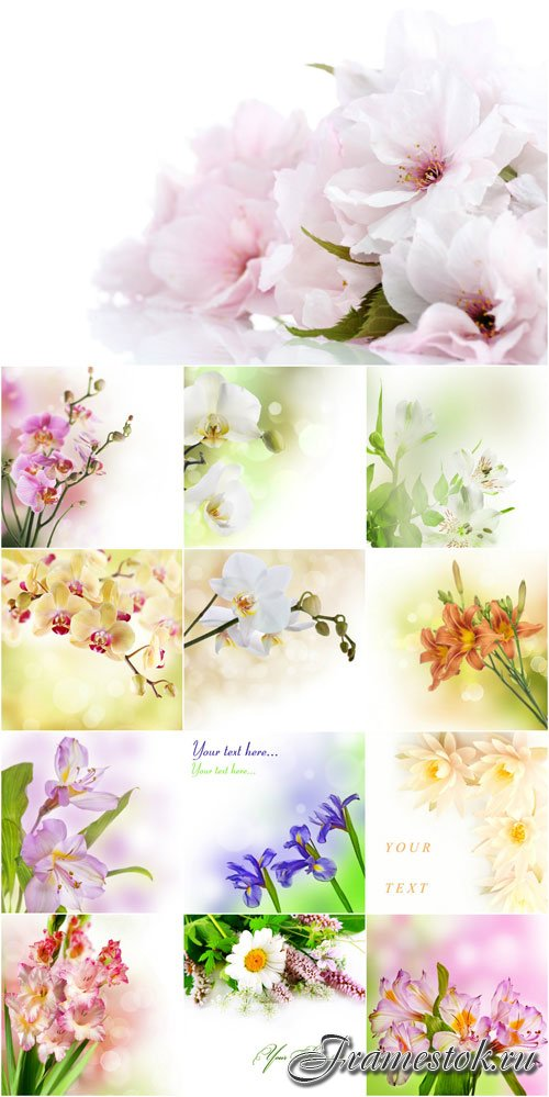 Raster backgrounds with delicate spring flowers