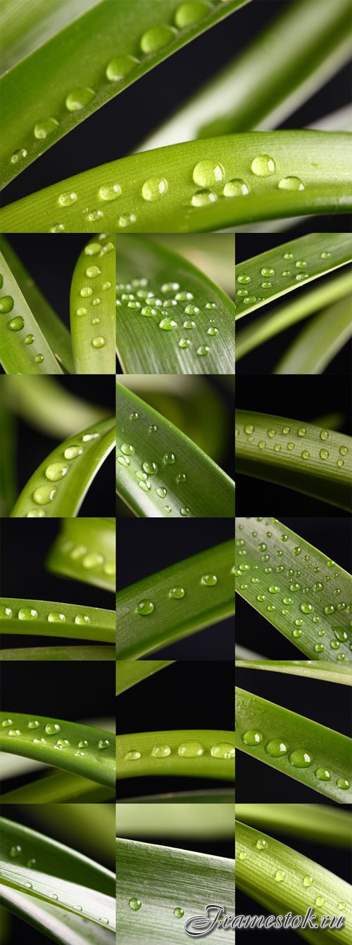 Glossy leaves with drops of water