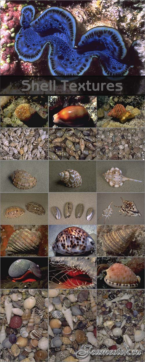 Shell Textures