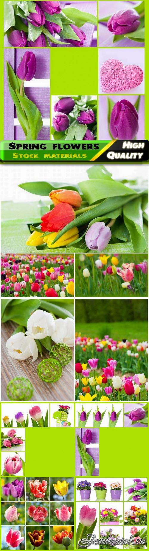 Сollage and fields with spring flowers and tulips 10 HQ Jpg
