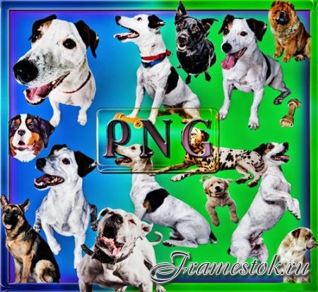 Клипарты на прозрачном фоне - Собаки разных пород
