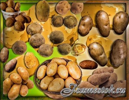 Png клипарты - Картошка