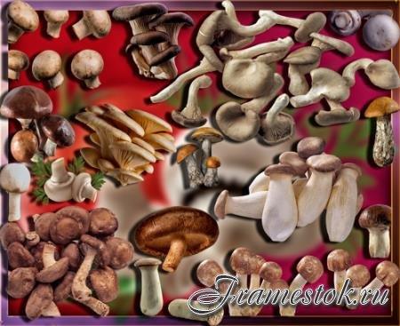 Растровые клипарты - Осенние грибы