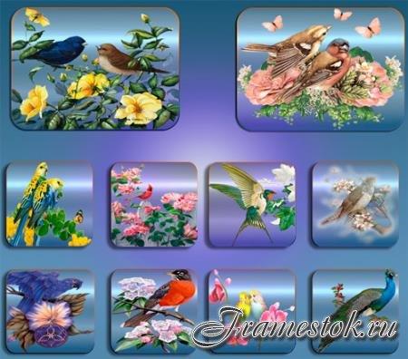 Клипарты для фотошопа - Птицы в цветах