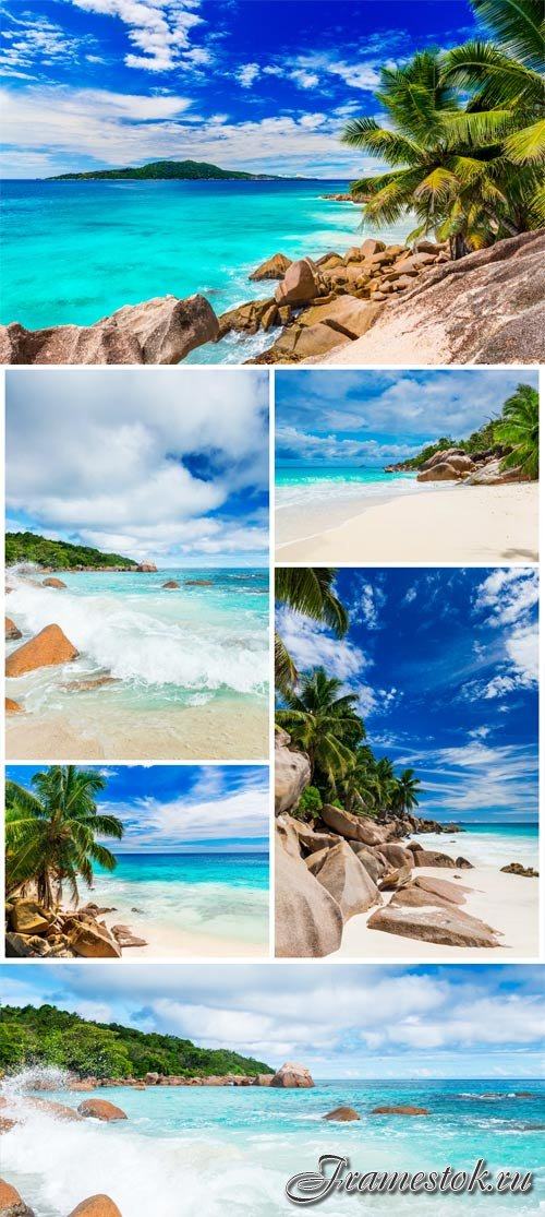 Palm trees and rocks by the sea stock photo