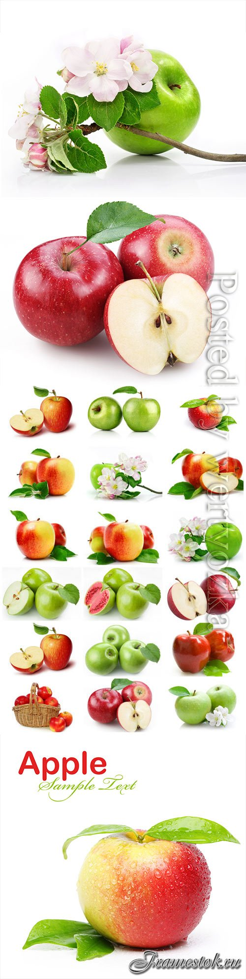 Red and green apples and apple blossom stock photo